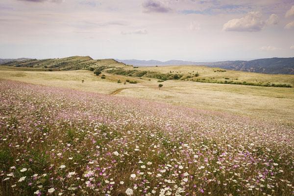 Blumenwiesen im Waschlowani Nationalpark (Vashlovani National Park), Georgien