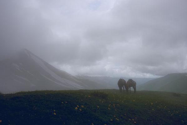 Ausritt auf den nebligen Zagari-Pass