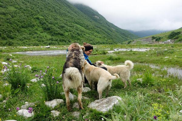 Hunde aus Ushguli haben uns die komplette Wanderung begleitet