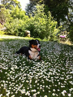 unser treuer Wachhund Kimi