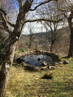 Biotop im Frühling
