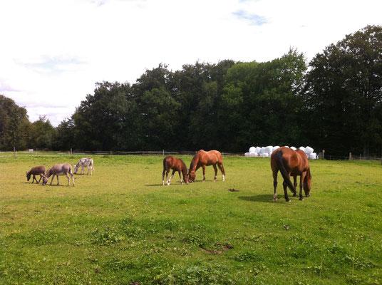 mit den Pferden zusammen
