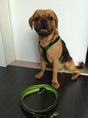 Perfect fit - Hundegeschirr