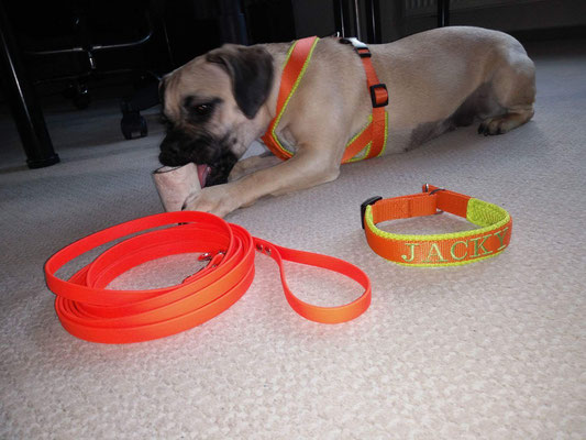Perfect fit - Hundegeschirr, BioThane® Schleppleine, Halsband bestickt und gefüttert