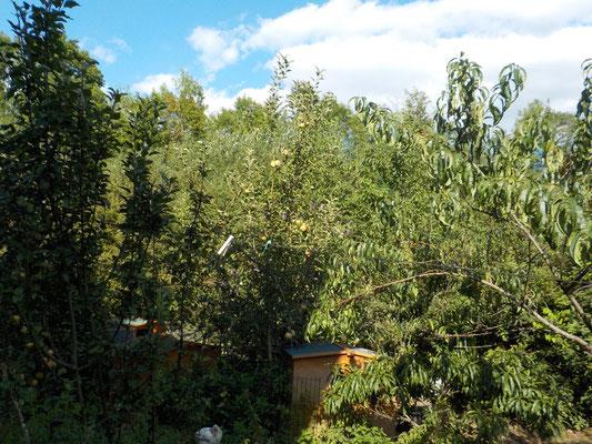 Mein Garten mit den Büschen