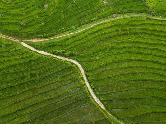 Reisterassen, Vietnam