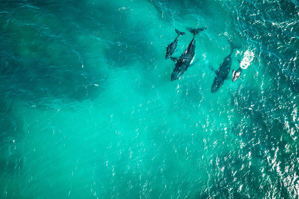 Wale in Australien, Ningaloo Reef