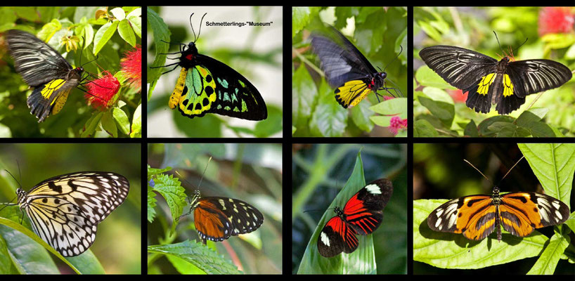 Bildband Florida, USA, Raimund Franken, Schmetterling-Museum, Key West