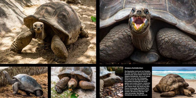 Bildband Seychellen, Raimund Franken, Aldabra Riesen-Schildkroeten