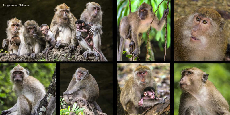 Bildband Suedthailand, Thailand, Reisefuehrer, Reisebildband, Travel Guide, Raimund Franken, Langschwanzmakaken, Affentempel Suwankuha