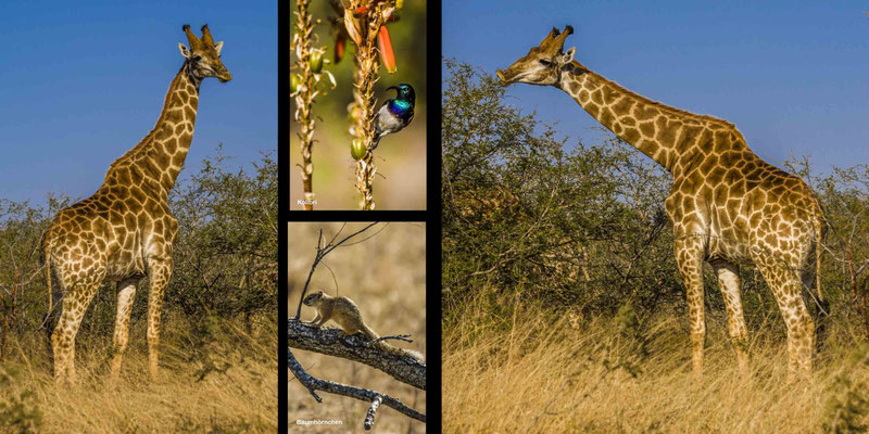 Bildband Südafrika, Reisebildband Südafrika, Reiseführer Südafrika, Südafrikareise