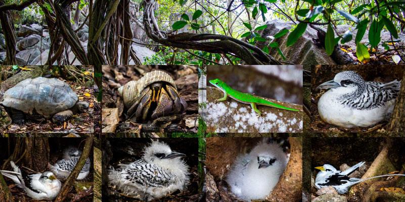 Bildband Seychellen, Reisefuehrer, Guide, Reisebildband, Raimund Franken, Vogelinsel Cousin