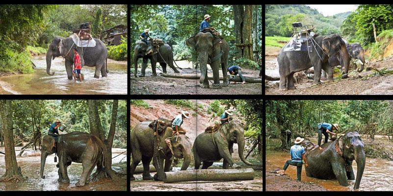 Bildband Suedthailand, Thailand, Raimund Franken, Elefantentrek durch den Dschungel