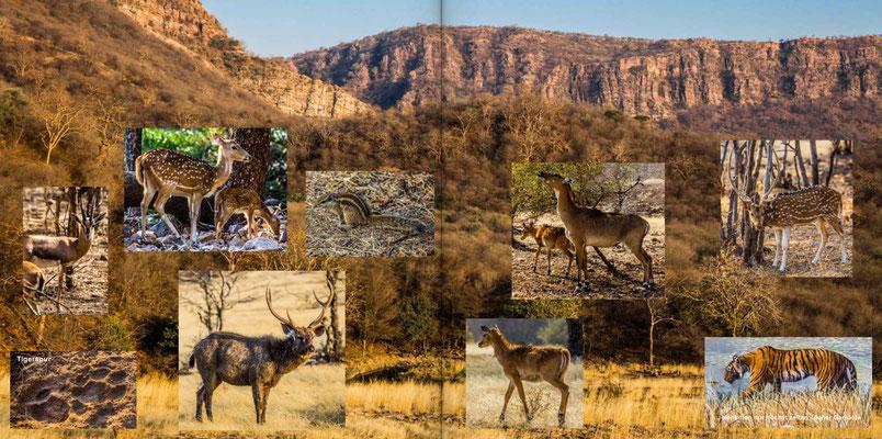 Bildband Rajasthan, Reisefuehrer, Reisebildband, Raimund Franken, Tigerreservat Ranthambore Nationalpark