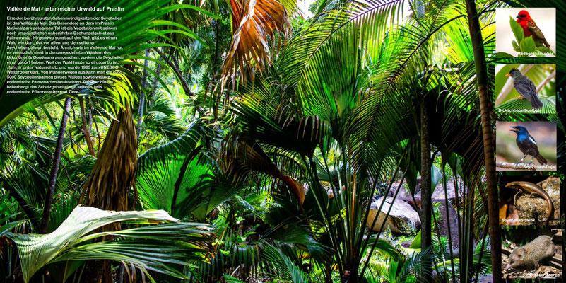 Bildband Seychellen, Reisefuehrer, Guide, Reisebildband, Raimund Franken, Vallee de Mai, artenreicher Urwald auf Praslin, Unesco Welterrbe