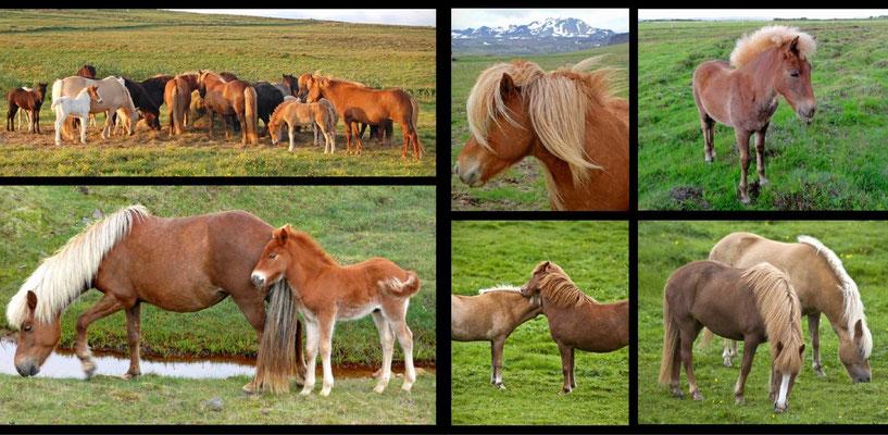 Bildband Island, Iceland, Raimund Franken, Island Pferde