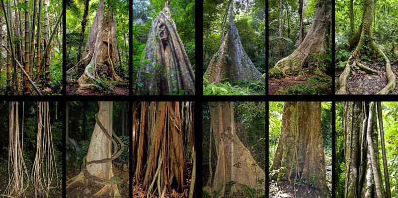 Bildband Suedthailand, Thailand, Raimund Franken, Baeume im Dschungel