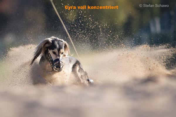 Cyra Fardos el Arab