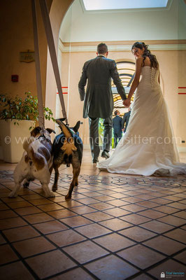 SPOSI CON IL CANE MATRIMONIO PUGLIA WEDDING DOG SITTER NOZZE