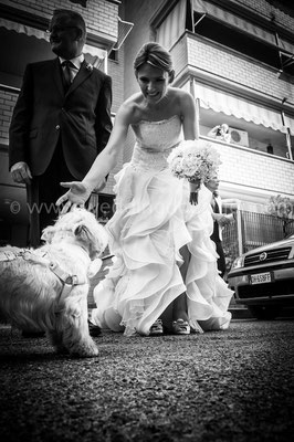 WEDDING DOG SITTER NAPOLI