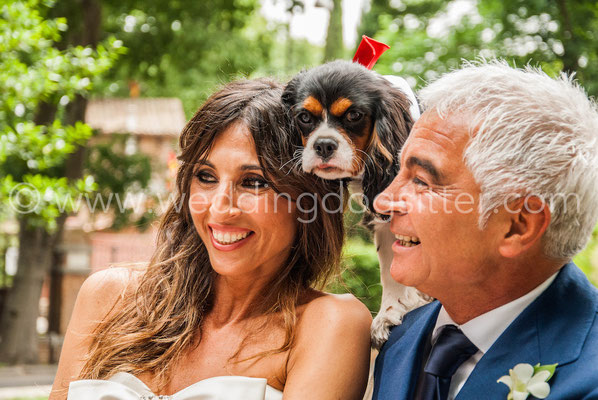 SPOSI CON IL CANE WEDDING DOGSITTING