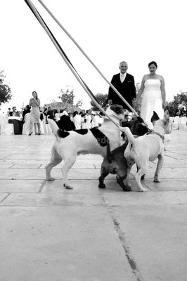 MATRIMONIO WEDDING DOG SITTER MATERA I LUOGHI DI PITTI