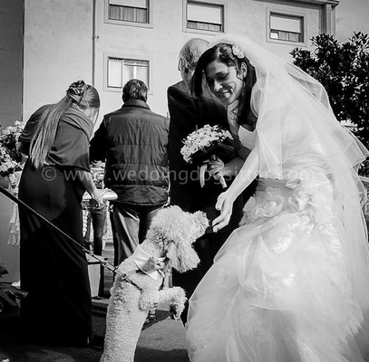 MATRIMONIO WEDDING DOGS SITTER NAPOLI