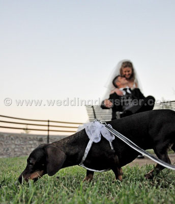 MATRIMONIO WEDDING DOG SITTER  CAMPAGNANO