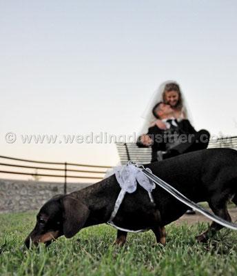 MATRIMONIO WEDDING DOG SITTER  CAMPAGNANO