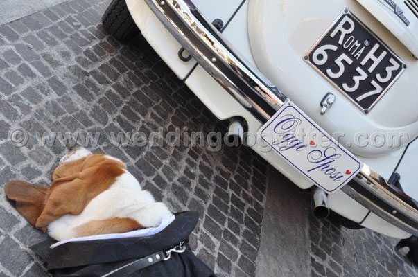 MATRIMONIO WEDDING DOG SITTER MONTEROTONDO