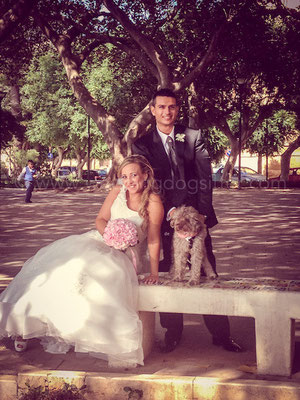 WEDDING DOG SITTER SICILIA