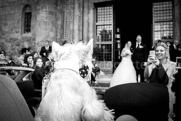 Foto di cane al matrimonio