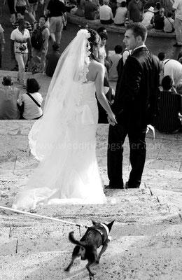 MATRIMONIO WEDDING DOG SITTER ROMA VILLA BELLINI
