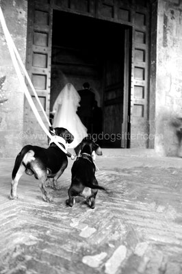 SPOSA ENTRA IN CHIESA SANT'ANDREA VITERBO CON I CANI WEDDING DOG SITTER MATRIMONIO A I DUE CIGNI