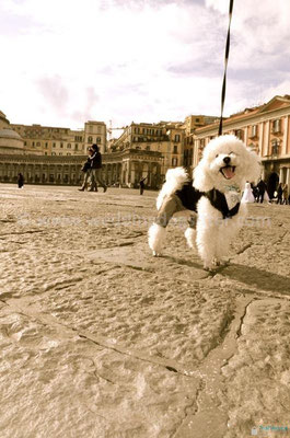 MATRIMONIO WEDDING DOG SITTER NAPOLI
