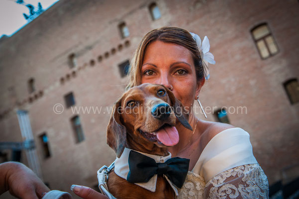 WEDDING DOG SITTER MODENA CARPI