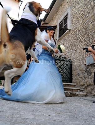 CANE DELLA SPOSA AL WEDDING