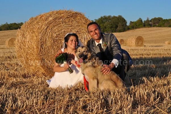 MATRIMONIO WEDDING DOG SITTER TOSCANA FIRENZE - GROSSETO