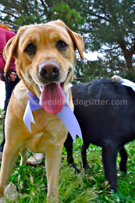 MATRIMONIO WEDDING DOG SITTER CAPUA
