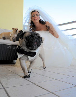 MATRIMONIO WEDDING DOG SITTER PESCARA CASTELLO DI SEPTE