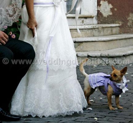 MATRIMONIO WEDDING DOG SITTER  FROSINONE