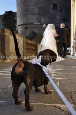 MATRIMONIO WEDDING DOG SITTER BRACCIANO