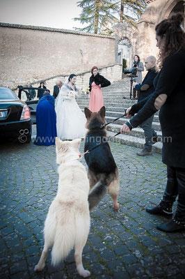 SPOSA CON IL CANE A FROSINONE WEDDING DOGSITTER