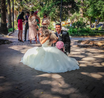 WEDDING DOG SITTER TRAPANI