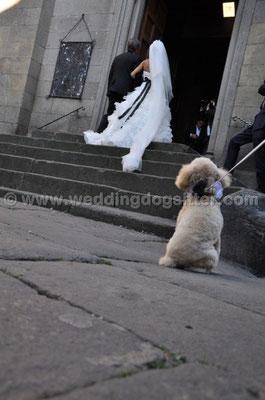 MATRIMONIO WEDDING DOG SITTER VITERBO