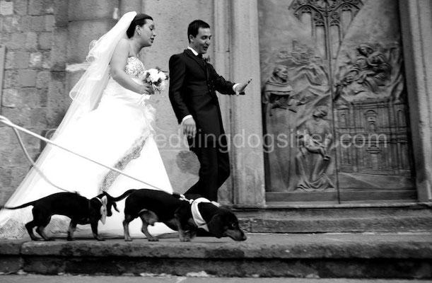 SPOSI WEDDING DOGS SITTER VITERBO MATRIMONIO A I DUE CIGNI