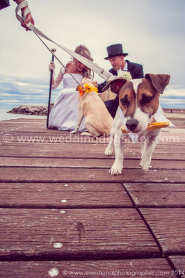CANI AL MATRIMONIO WEDDING DOG SITTER