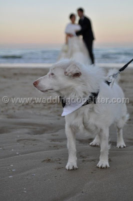 MATRIMONIO WEDDING DOG SITTER  PESCARA