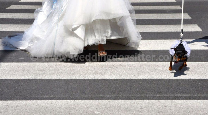 MATRIMONIO WEDDING DOG SITTER FANO PESARO URBINO