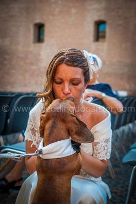 WEDDING DOG SITTER EMILIA ROMAGNA